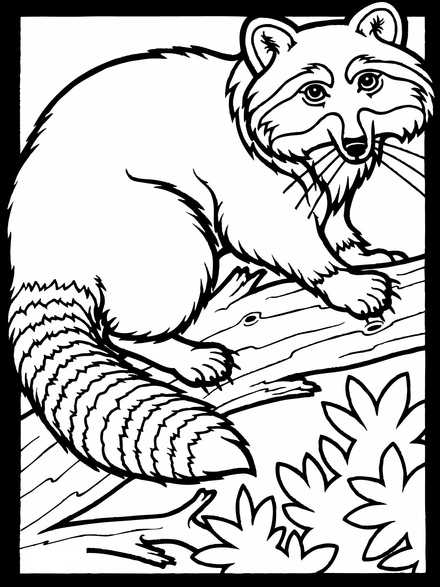 Free Coloring Pages Raccoon K5 Worksheets