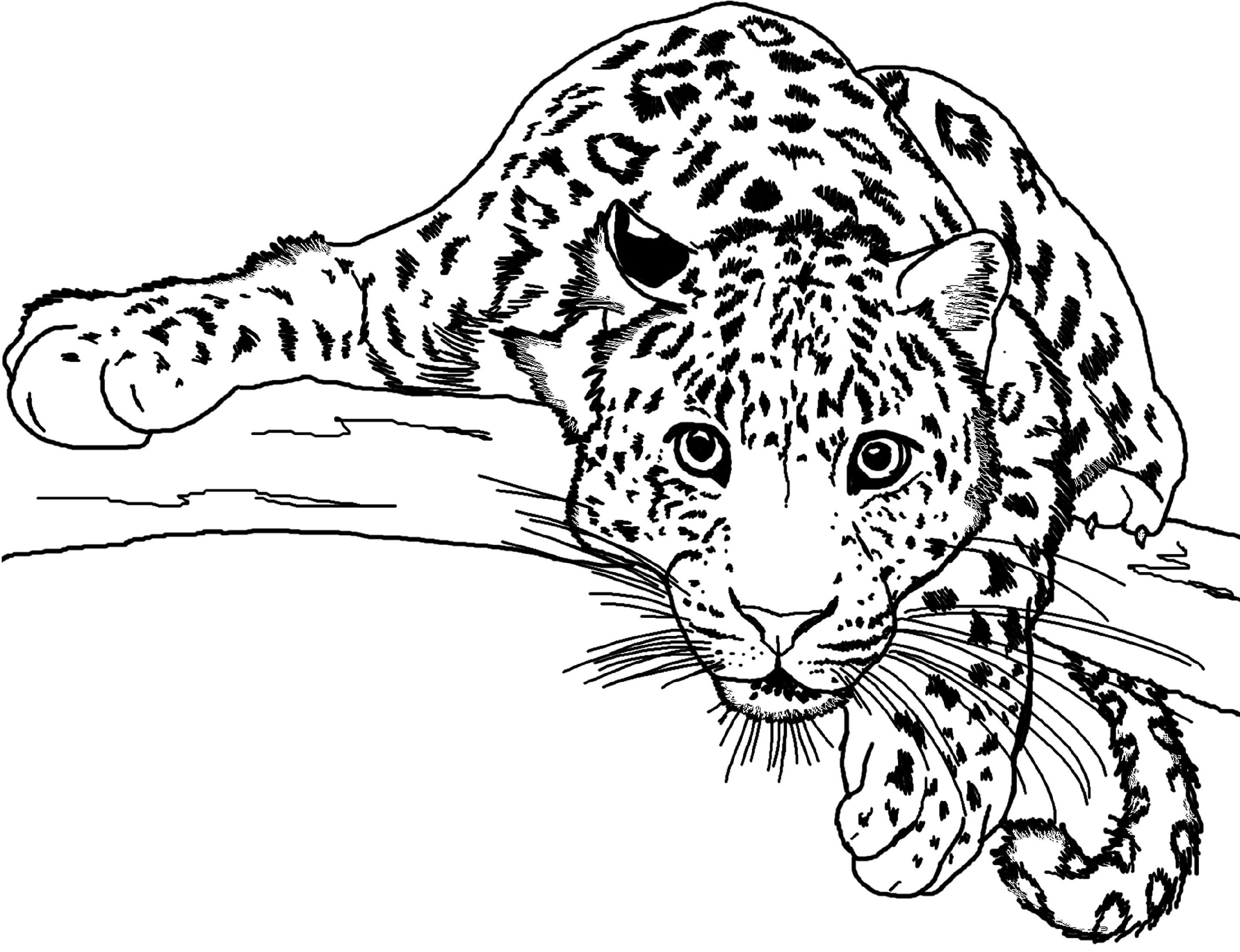 Jaguar Coloring Pages Free