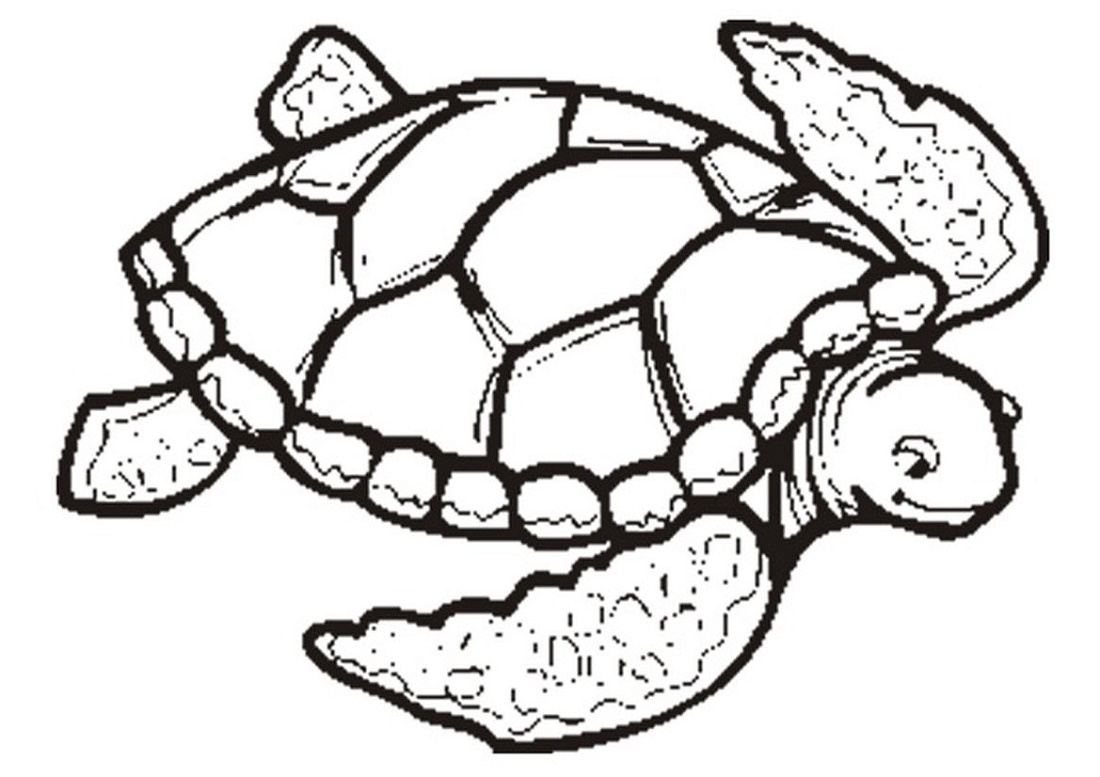 Red Eared Slider Turtle Coloring Pages