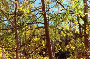 Fall in Colorado, picture courtesy of CDB