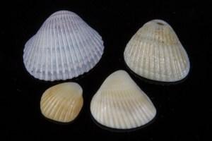 Dead Sea Seashells, Part 4 of 6, Segment C