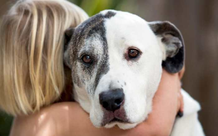 Lymphoma in Dogs - Lymphoid Cancer in Dogs - CBD Oil for