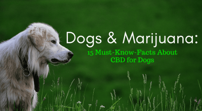 Dogs & Marijuana