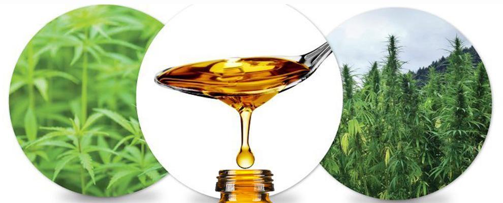 CBD oil for dogs. Cannabis for dogs. Hemp CBD oil.