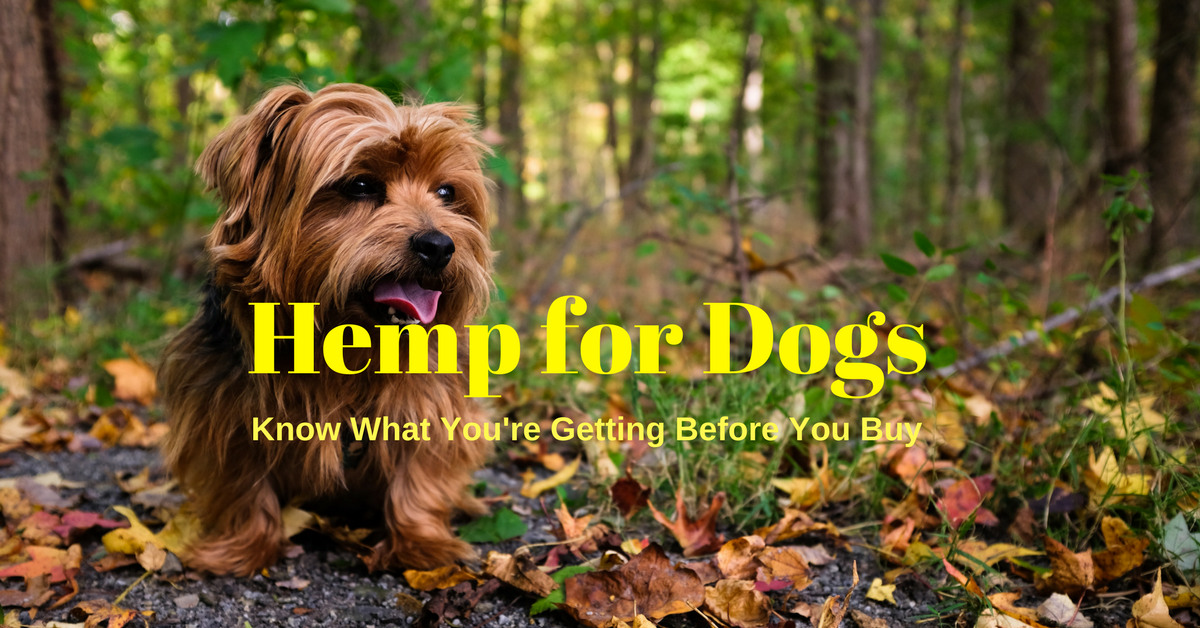 Hemp for dogs. Cannabis for dogs. CBD oil for dogs. CBD dosage for dogs.