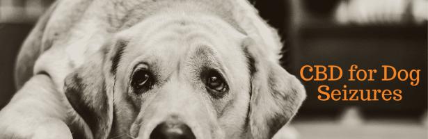 CBD Dog Seizures
