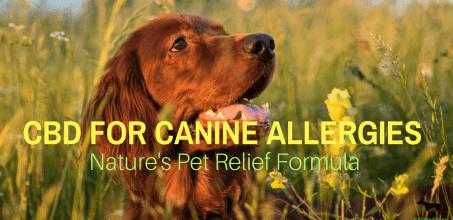 CBD Dogs Allergies