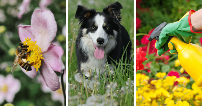 CBD for dogs allergies. CBD for Dogs with Allergies