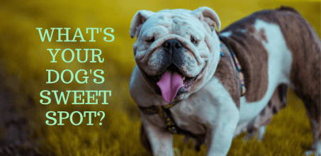 CBD Dosage For Dogs By Weight