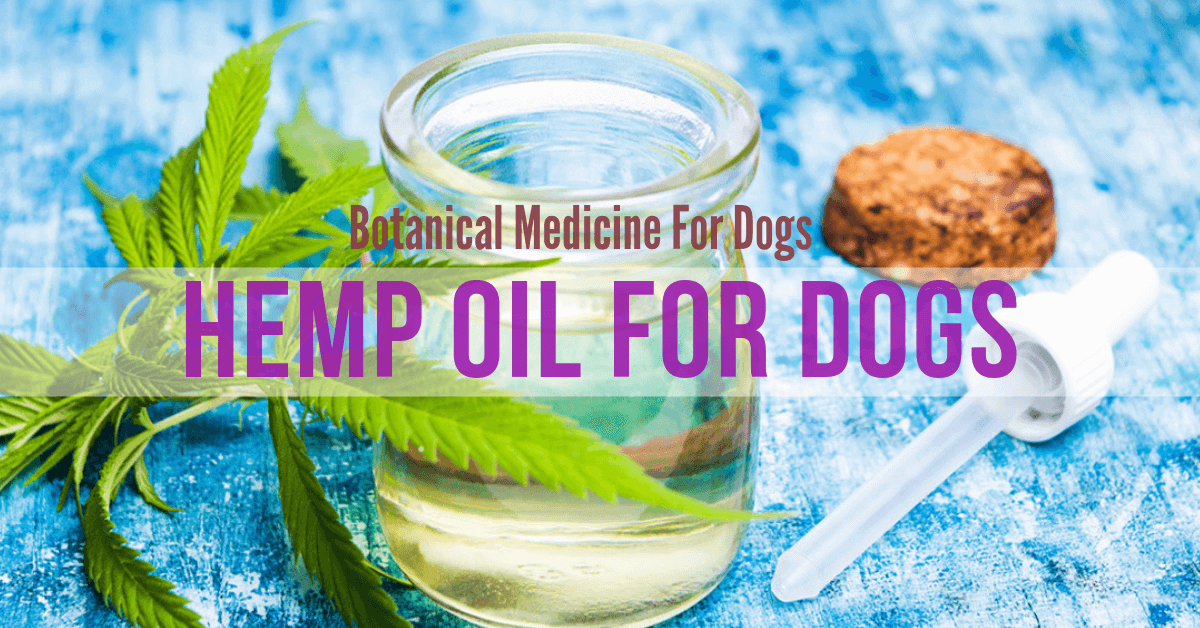 Dog hemp oil. Hemp Oil for dogs. Hemp oil for dogs benefits. PCR hemp oil for dogs.