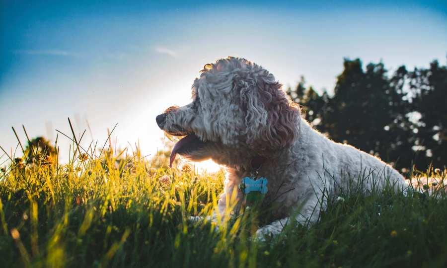 Best CBD hemp oil for dogs