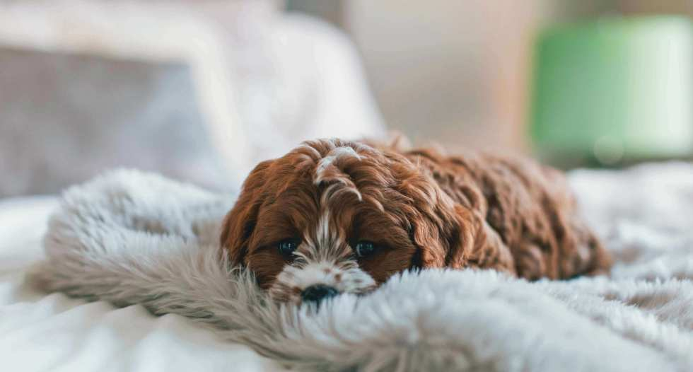 How much does dog sleep