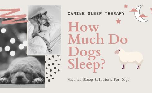 How Many Hours Do Dogs Sleep a Day