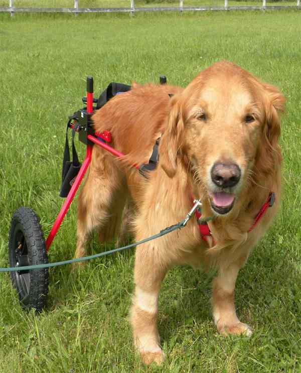 Front Support K9 Carts - Year of Clean Water