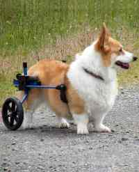 Dog Wheelchairs by K9 Carts are Made in the USA ...