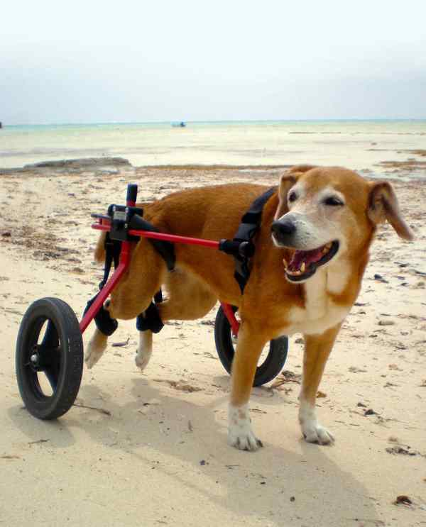 Rear Support Dog Wheels - Year of Clean Water