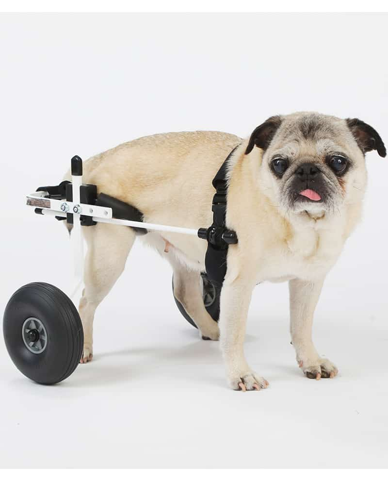 wheel chairs for dogs cheap swivel chair rear support dog wheelchair by k9 carts