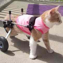 Wheelchair For Cats Diy Roman Chair Cat By K9 Carts The Pet Mobility Experts Made In Usa