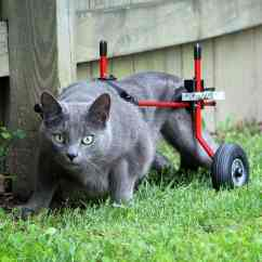 Wheelchair For Cats Modern Leather Arm Chair Cat By K9 Carts - The Pet Mobility Experts. Made In Usa