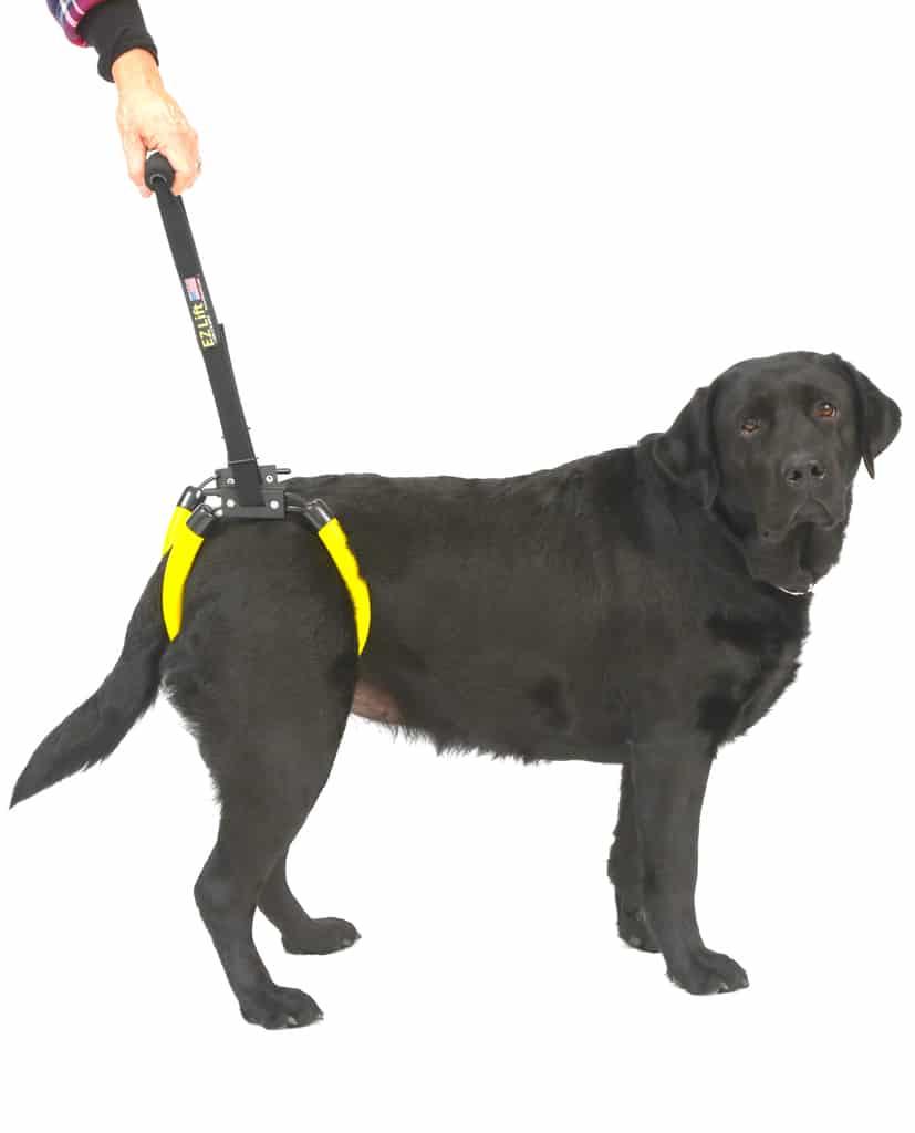 hight resolution of dog harnes