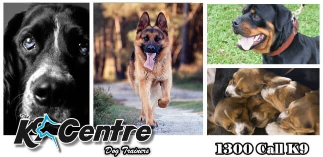 The K9 Centre Dog Trainers Brisbane