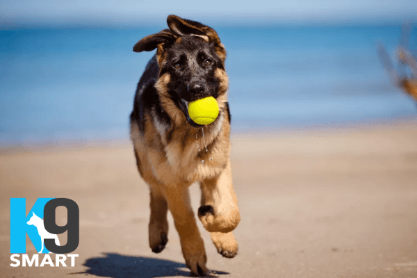 Private Puppy Training with K9 Puppy Smart lessons Brisbane All areas