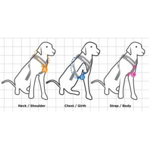All-Safe Harness