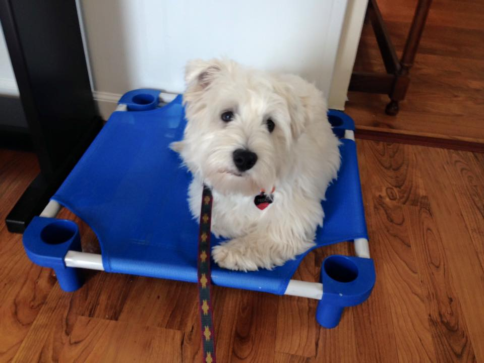 puppy- Frederick MD