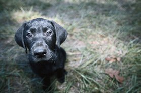 Puppy House Training