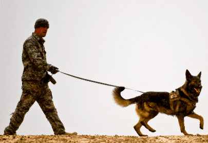 Finding The Dead: A Day In The Life of a Cadaver Dog