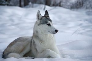 Dog Cold Weather Tips