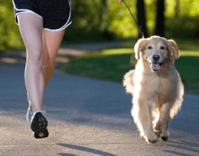 Dog fitness