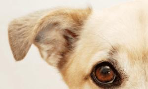 Pet Insurance: Should You Admit Liability?