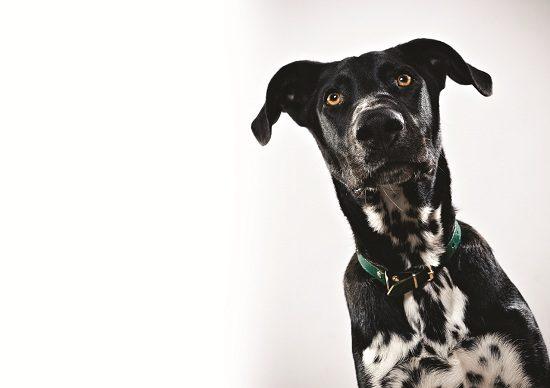 Is My Dog A Hypochondriac?
