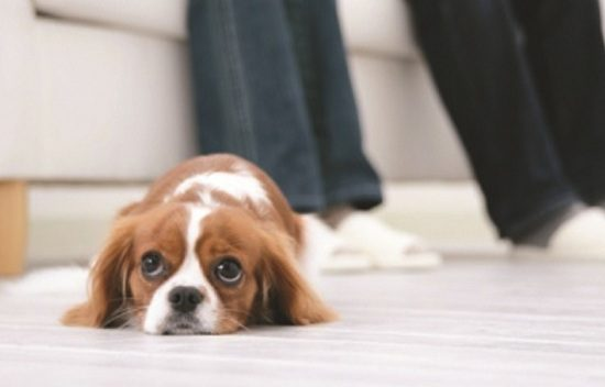 Top 10 Bad Dog Owner Habits... & How to Avoid Them