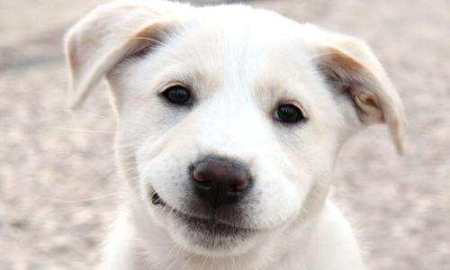 puppy housetraining advice