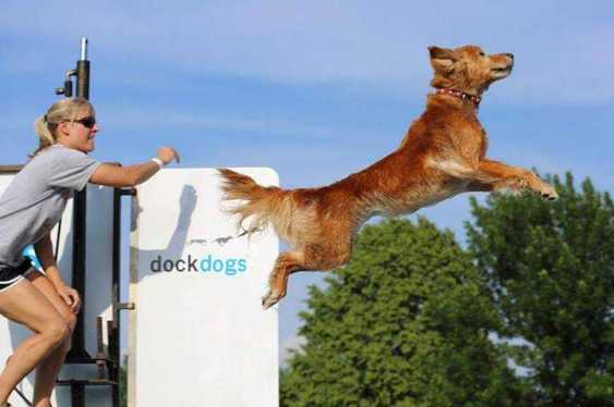 Dock dogs USA