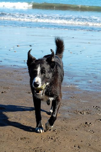 dog fetch photo