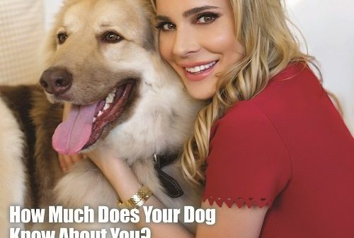 K9 Magazine Issue 91