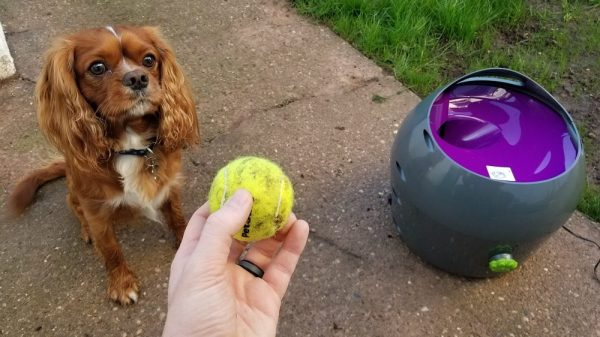 If You're Thinking About Getting Your Dog an Automatic Tennis Ball Thrower, Read This First