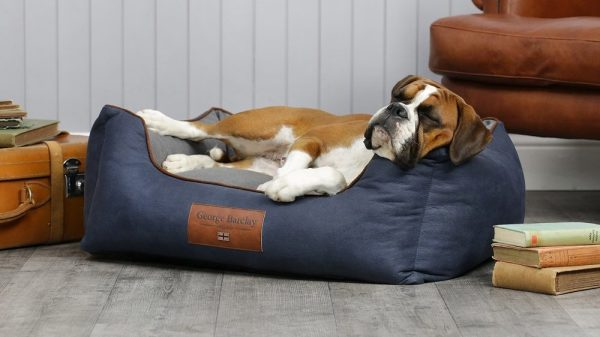 4 Must-Have Products for Dog Homes