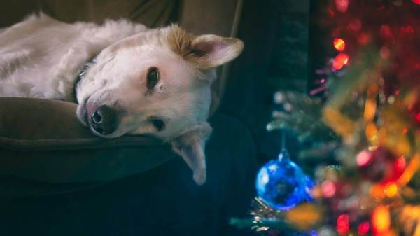 Christmas Dangers for Dogs: How to Help Your Dog Avoid Hazards