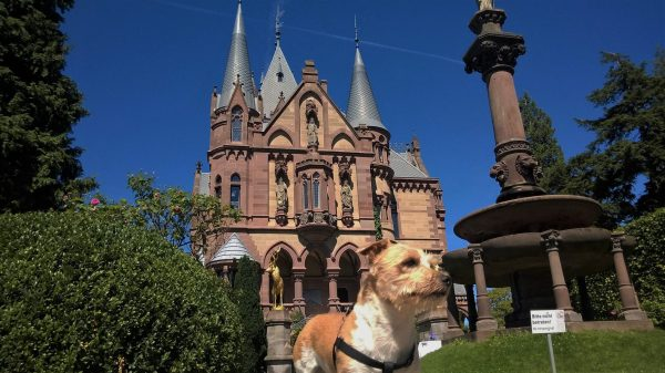 Thinking of Visiting Cologne With Your Dog? No? You Should Be!