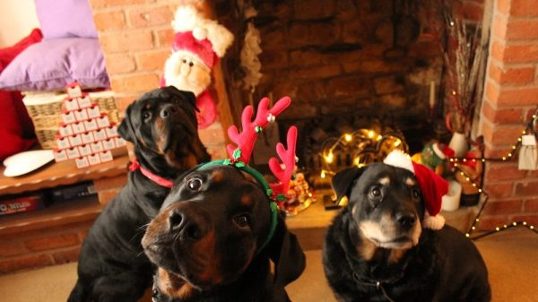 7 Amazing Christmas Gift Ideas for Your Dog