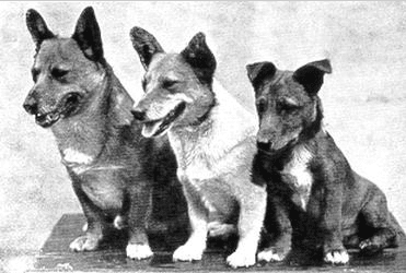 Meet 8 of the Most Important Dogs in British History You Should Know About