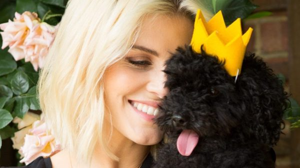 Ashley James: 'I'm the Queen of Toy Poodles'