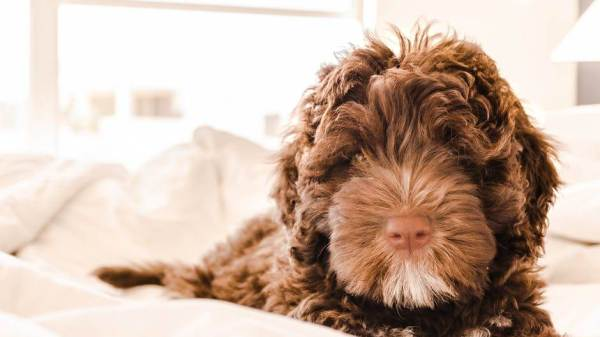 4 Pet Brands You Need to Know About