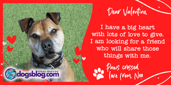 The Valentine's Letters of These 12 Dogs Will Melt Your Heart