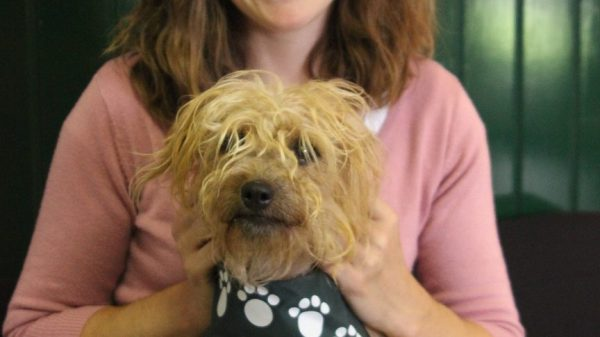 Real Life: Volunteer Dog Walker Rises to Rescue Centre Manager