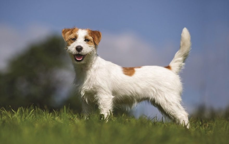 5 Valuable Life Lessons from Dogs - And Why We Should Pay Attention